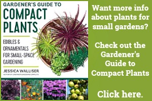 The best compact plants for small gardens.