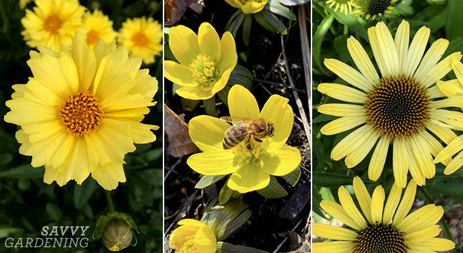 Yellow perennials flowers (and a few annuals, too!)
