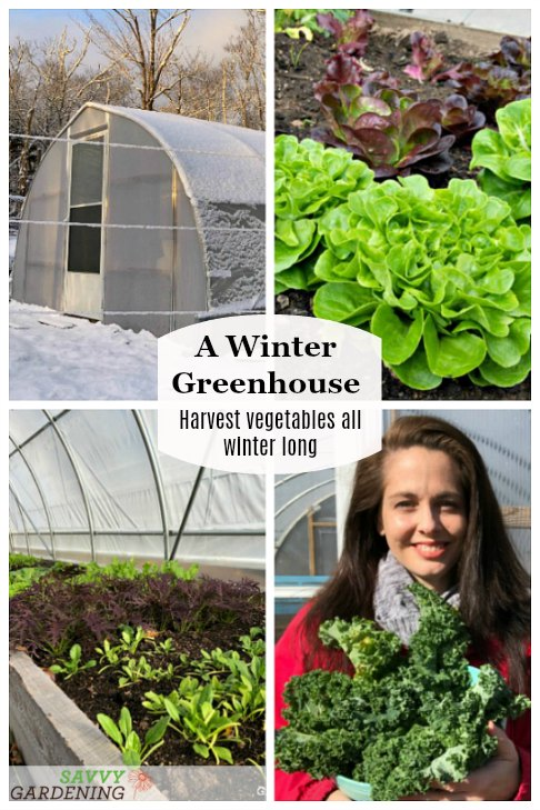 Harvest vegetables all winter from a winter greenhouse