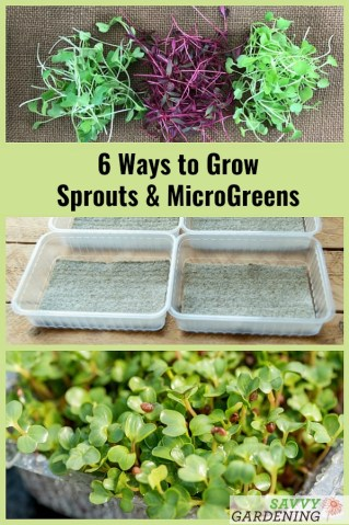 6 Home Grown Sprouts Means No Pesticides