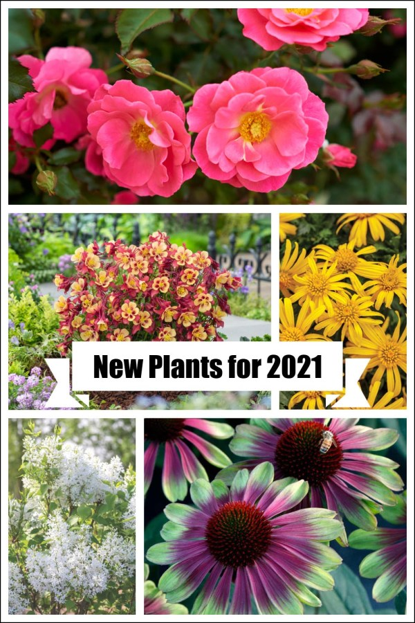 new plants for 2021 gardens