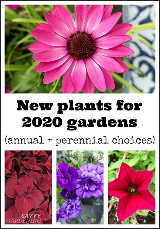 Pin it! New plants for 2020 gardens