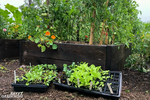 A vegetable garden planner for a healthy and productive garden