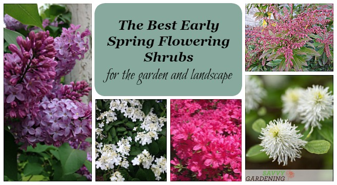 The Best Early Spring Flowering Shrubs For The Garden