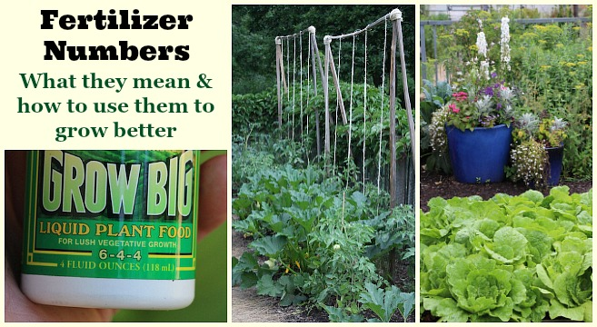 Fertilizer numbers: What they mean and how to use them to grow better