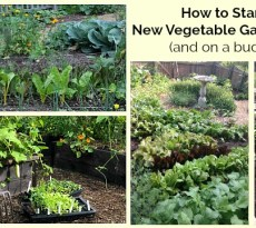 Need to get growing fast? Here's the best step by step technique for putting in a new vegetable garden.