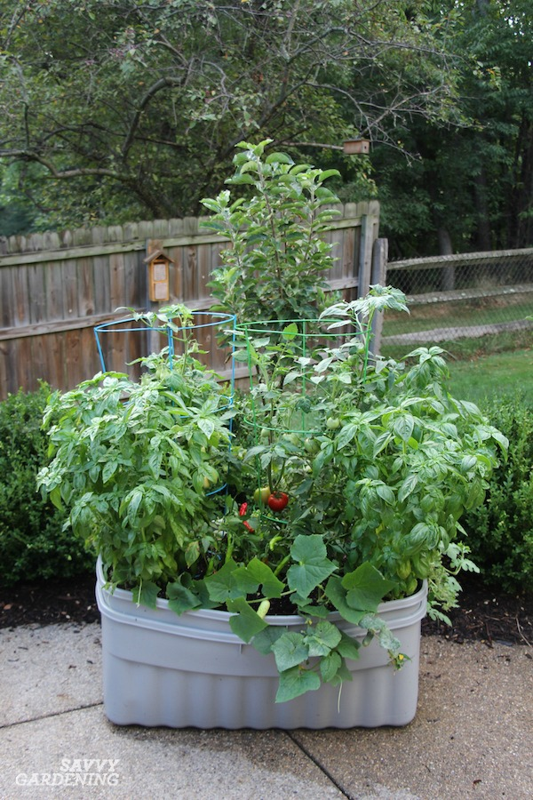 Starting a Vegetable Garden in a Storage Bin