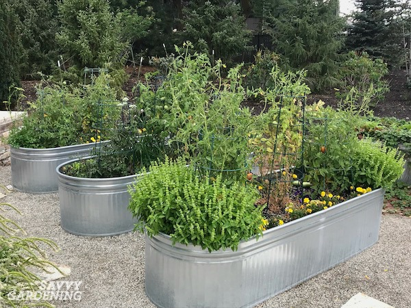 Stock Tank Vegetable Gardening