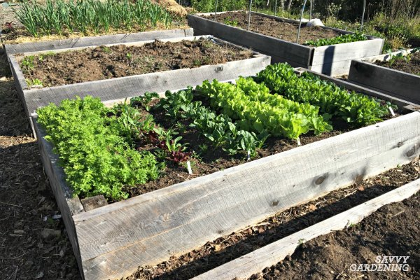 reduce weeds with intensive planting