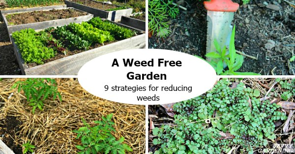 A weed free garden: 9 strategies for reducing weeds