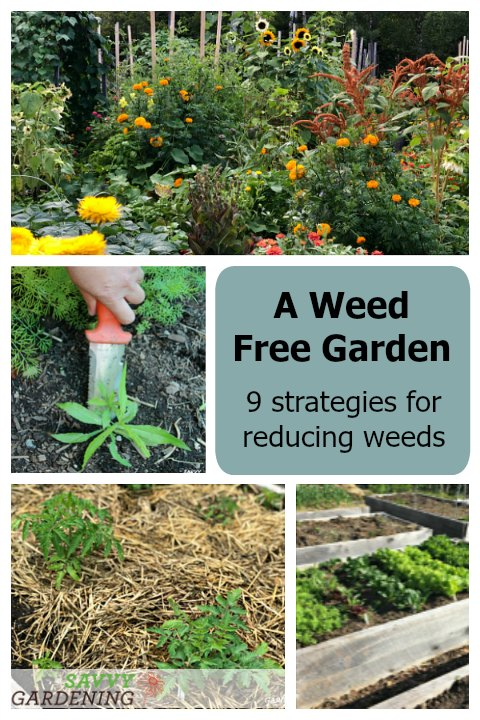 Learn how to grow a weed free garden