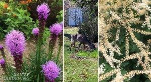 deer-resistant perennials