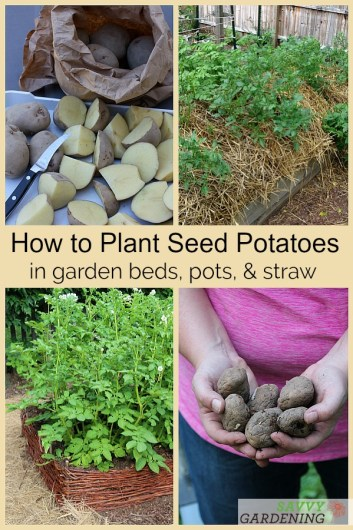 3 Methods for Planting Seed Potatoes