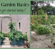 Kitchen garden basics
