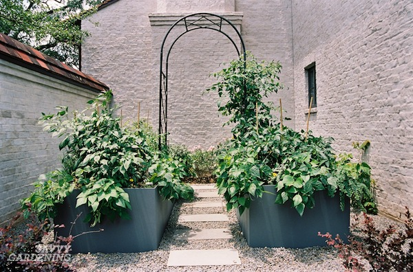 Designing a small backyard vegetable patch