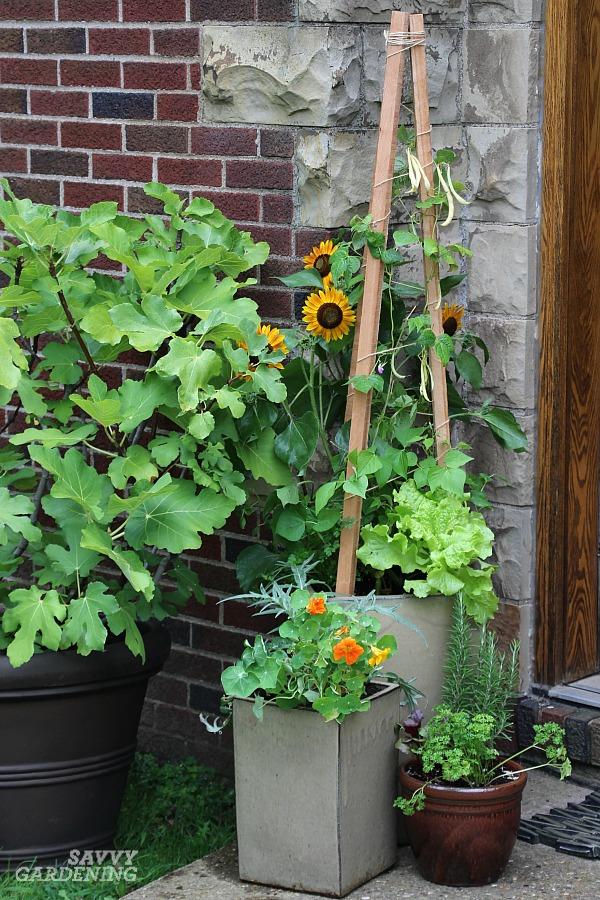 Container vegetable garden for a patio.