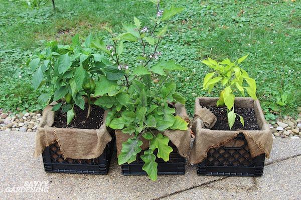 Milk crate patio food garden.