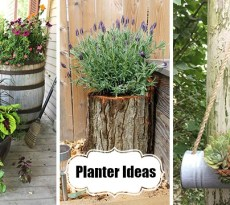 Planter ideas for creative container arrangements