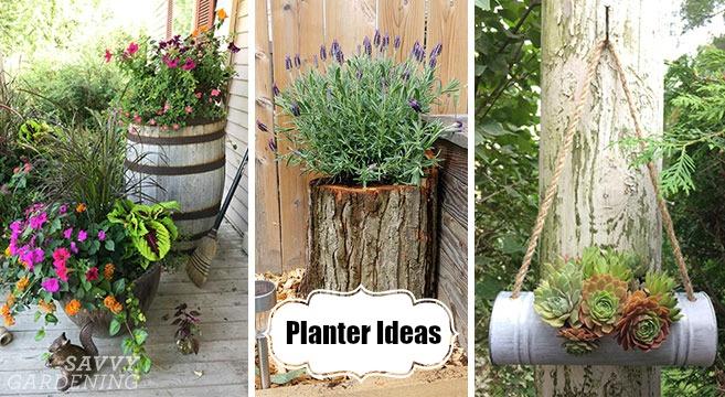 Planter ideas for creative container arrangements