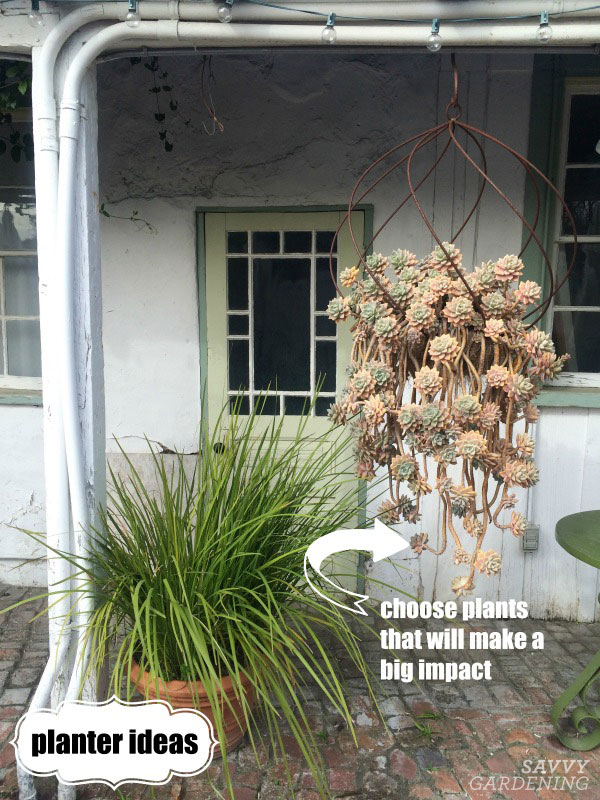 Use one big plant in a container to make a big impact.