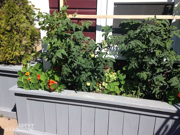 Wooden planter box for growing food on the patio.