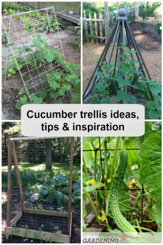 Cucumber trellis ideas, tips and inspiration for help you grow healthier and more productive plants