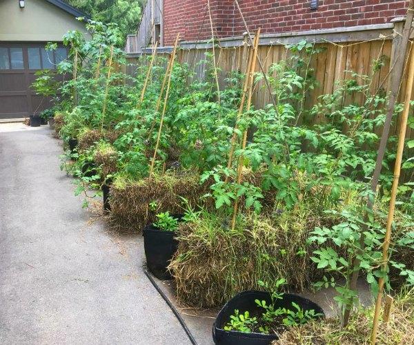 straw bale garden in driveway
