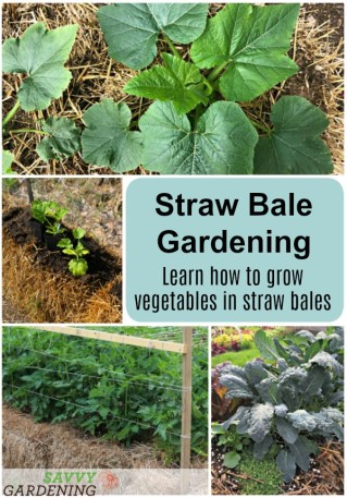 Learn how to grow vegetables in straw bales