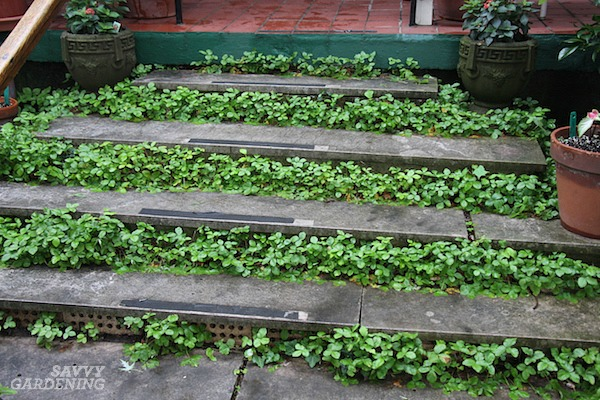 Grow plants in between steps for added interest