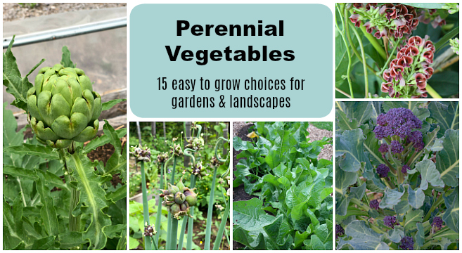 Growing perennial vegetables