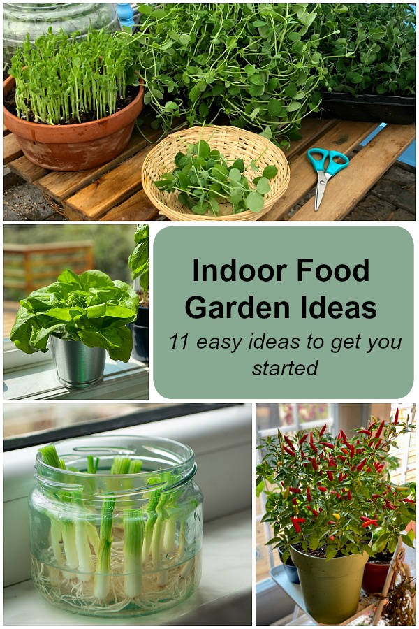 Discover 11 indoor food garden ideas for windowsills and grow lights