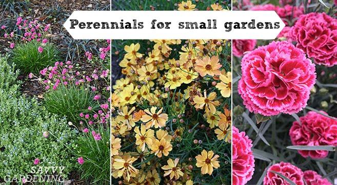 Perennials for small gardens