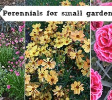 Perennials for small gardens