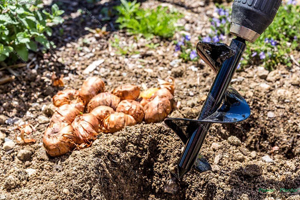 Power Planter augers make bulb planting a cinch!