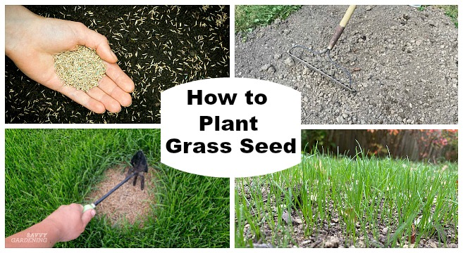Tips for planting grass seed