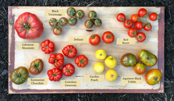 There are hundreds of heirloom tomatoes to grow