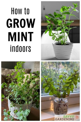 How to Grow Mint Indoors: 3 Methods for Success