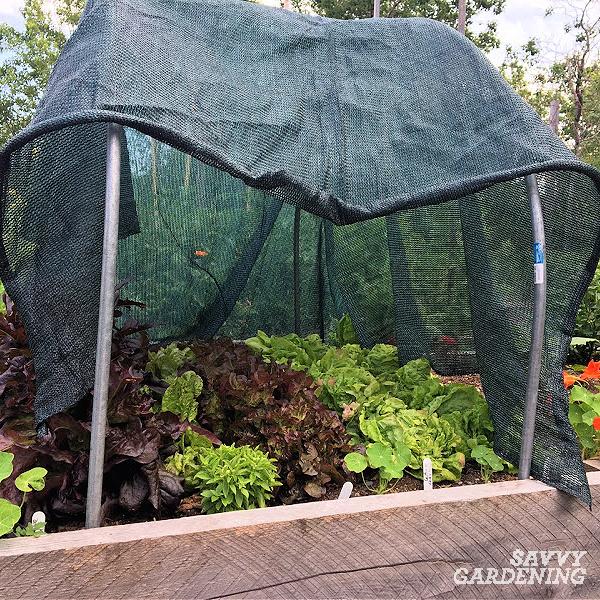 Shade cloth protecting summer crops