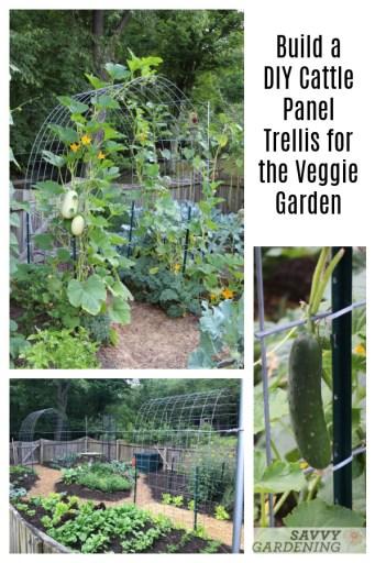 Build a Cattle Panel Trellis for Vertical Vegetable Gardening