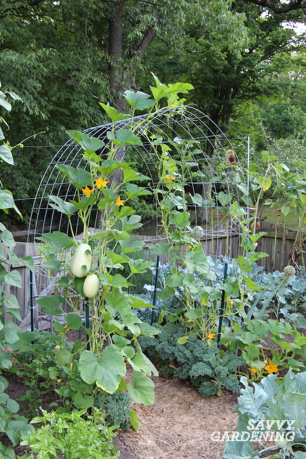 DIY instructions for building a cattle panel arch for the vegetable garden