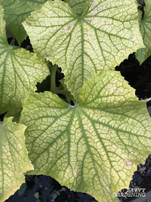 How to avoid nutritional deficiencies in a garden.