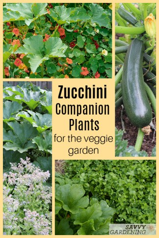 The best companion plants for zucchini