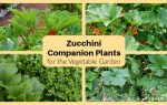 Using companion plants to grow a better garden
