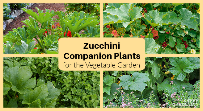 Using companion plants to grow a better garden