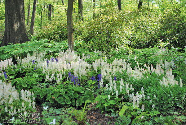 provide foraging habitat for pollinators in shade gardens