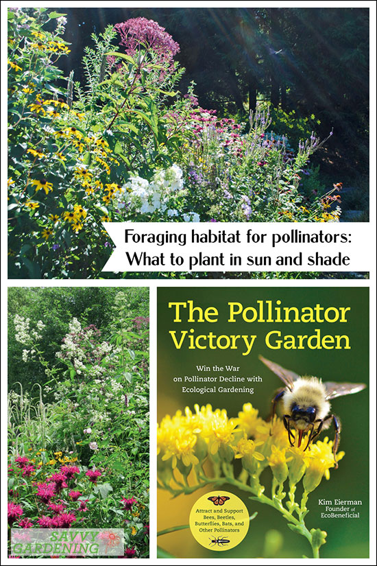 Planting foraging habitat for pollinators in sunny and shady areas