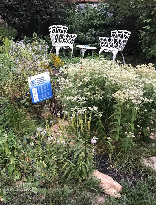 a rain garden filled with native plants