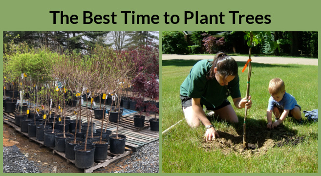 The best time to plant trees