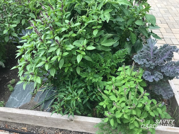 Basil is one of the best companion plants for peppers.