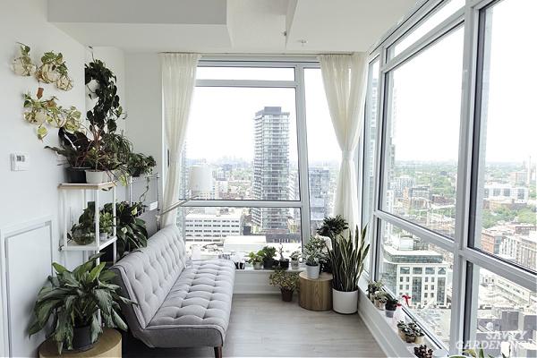 Houseplants in apartment